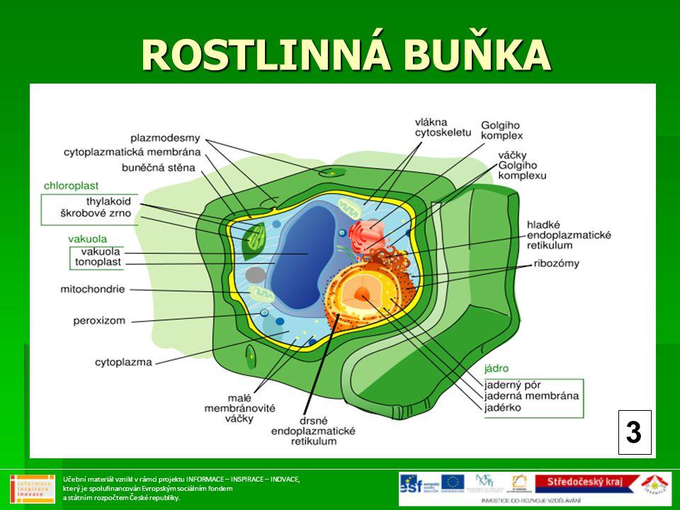 ROSTLINNÁ BUŇKA 3 Učební materiál vznikl v rámci projektu INFORMACE – INSPIRACE – INOVACE, který je spolufinancován Evropským sociálním fondem a státn
