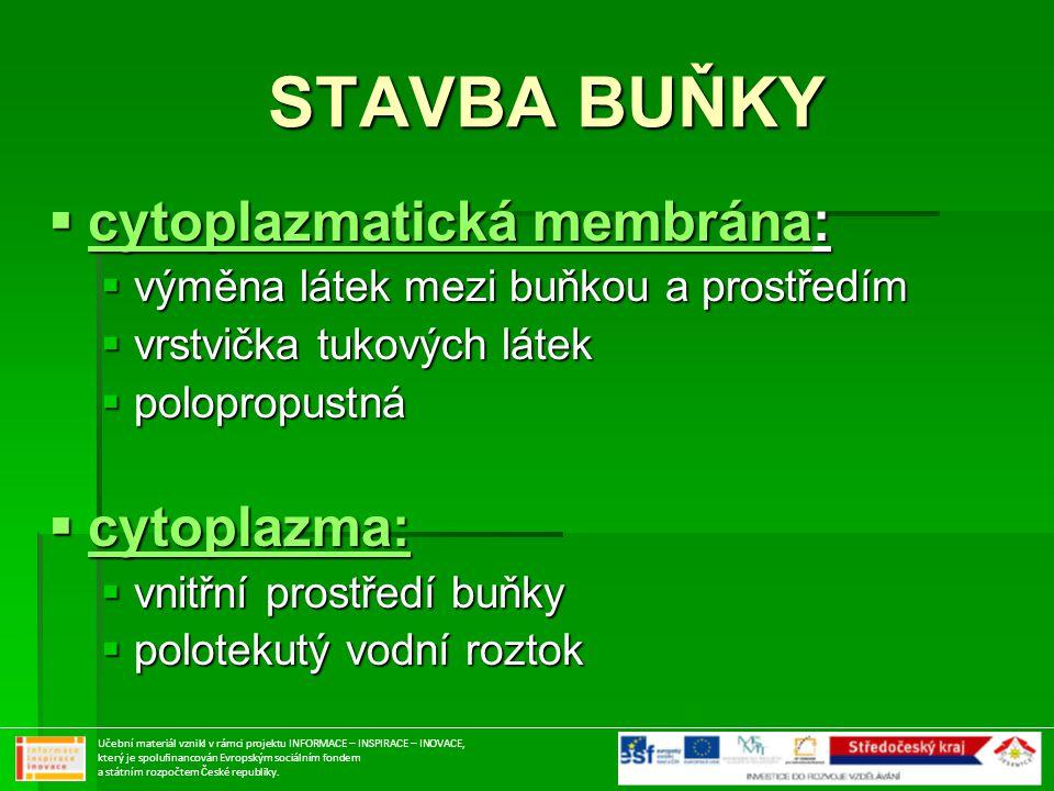 STAVBA BUŇKY STAVBA BUŇKY  cytoplazmatická membrána:  výměna látek mezi buňkou a prostředím  vrstvička tukových látek  polopropustná  cytoplazma: