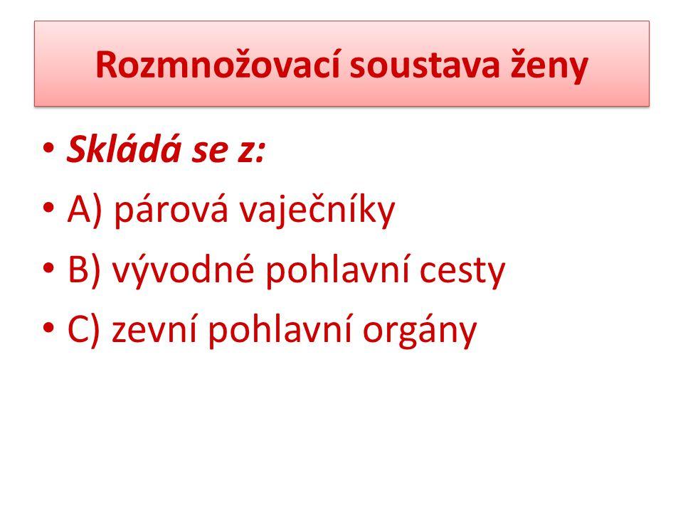 Rozmnožovací soustava ženy Skládá se z: A) párová vaječníky B) vývodné pohlavní cesty C) zevní pohlavní orgány