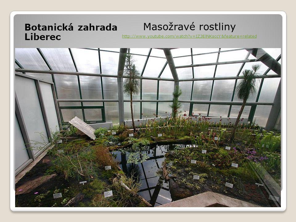Botanická zahrada Liberec Masožravé rostliny http://www.youtube.com/watch?v=IZ3ElNKsccY&feature=related