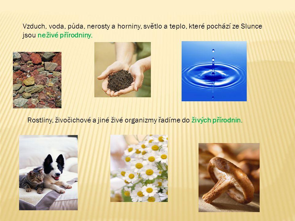 Vzduch, voda, půda, nerosty a horniny, světlo a teplo, které pochází ze Slunce jsou neživé přírodniny. Rostliny, živočichové a jiné živé organizmy řad