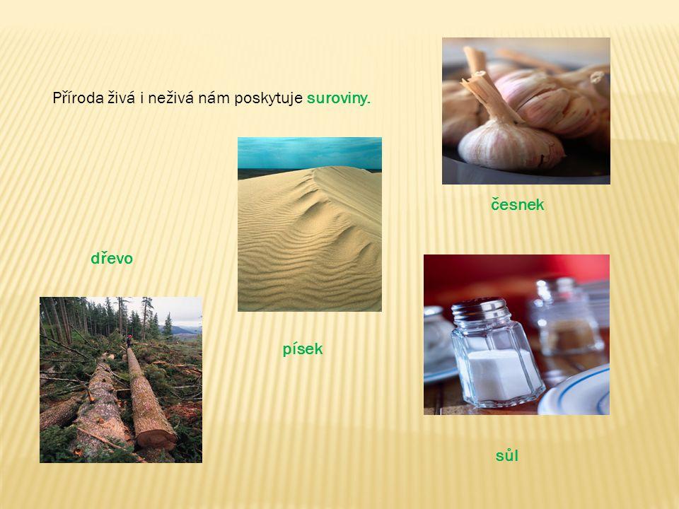 Příroda živá i neživá nám poskytuje suroviny. dřevo písek česnek sůl