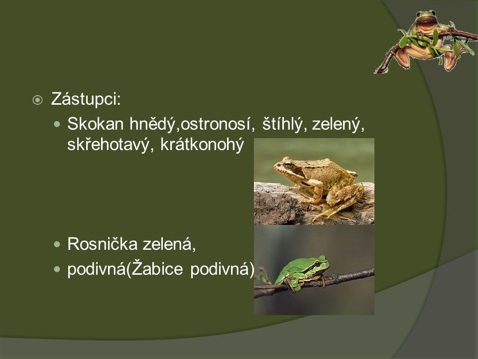  Zástupci: Skokan hnědý,ostronosí, štíhlý, zelený, skřehotavý, krátkonohý Rosnička zelená, podivná(Žabice podivná)