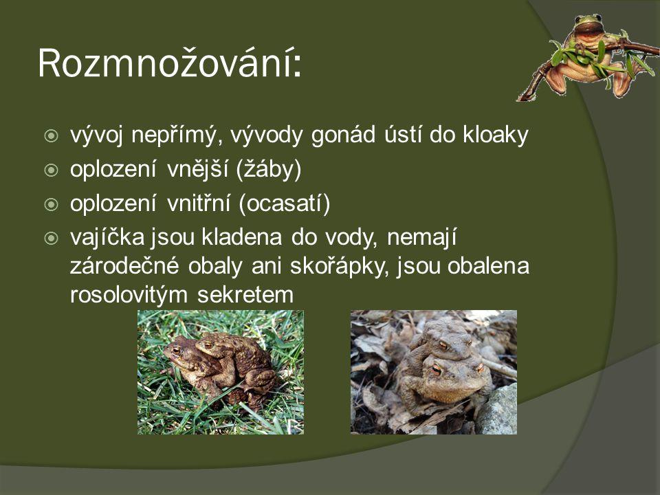 Rozmnožování:  vývoj nepřímý, vývody gonád ústí do kloaky  oplození vnější (žáby)  oplození vnitřní (ocasatí)  vajíčka jsou kladena do vody, nemaj