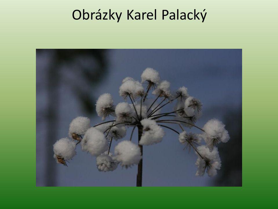 Obrázky Karel Palacký