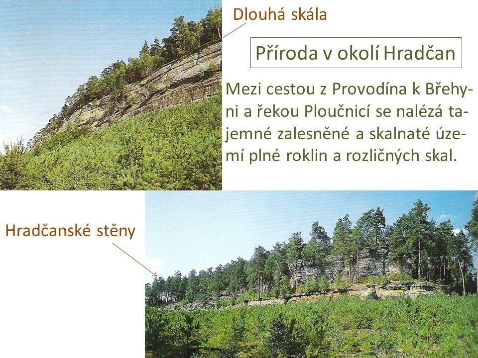 Dlouhá skála Hradčanské stěny Příroda v okolí Hradčan Mezi cestou z Provodína k Břehy- ni a řekou Ploučnicí se nalézá ta- jemné zalesněné a skalnaté ú