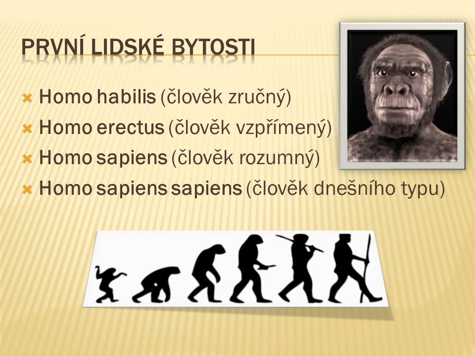 Homo habilis (člověk zručný)  Homo erectus (člověk vzpřímený)  Homo sapiens (člověk rozumný)  Homo sapiens sapiens (člověk dnešního typu)