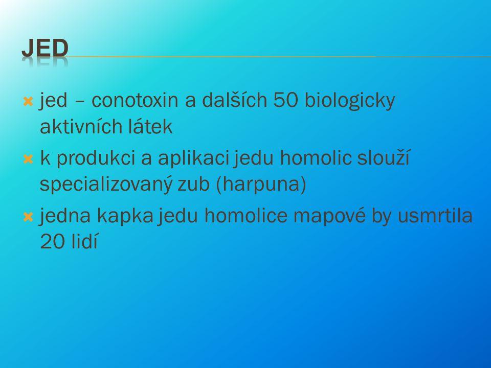 jed – conotoxin a dalších 50 biologicky aktivních látek  k produkci a aplikaci jedu homolic slouží specializovaný zub (harpuna)  jedna kapka jedu
