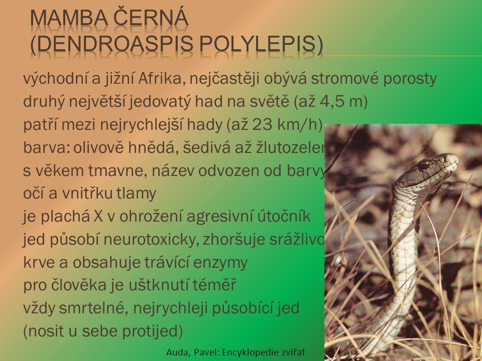 východní a jižní Afrika, nejčastěji obývá stromové porosty druhý největší jedovatý had na světě (až 4,5 m) patří mezi nejrychlejší hady (až 23 km/h) b