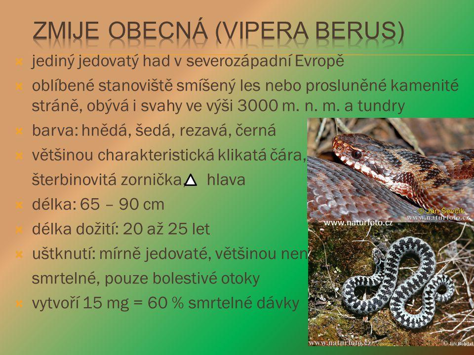  jediný jedovatý had v severozápadní Evropě  oblíbené stanoviště smíšený les nebo prosluněné kamenité stráně, obývá i svahy ve výši 3000 m. n. m. a