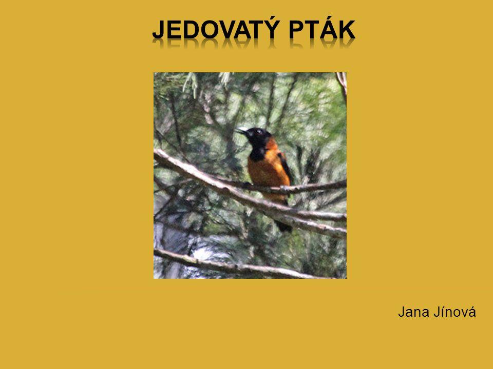 Jana Jínová