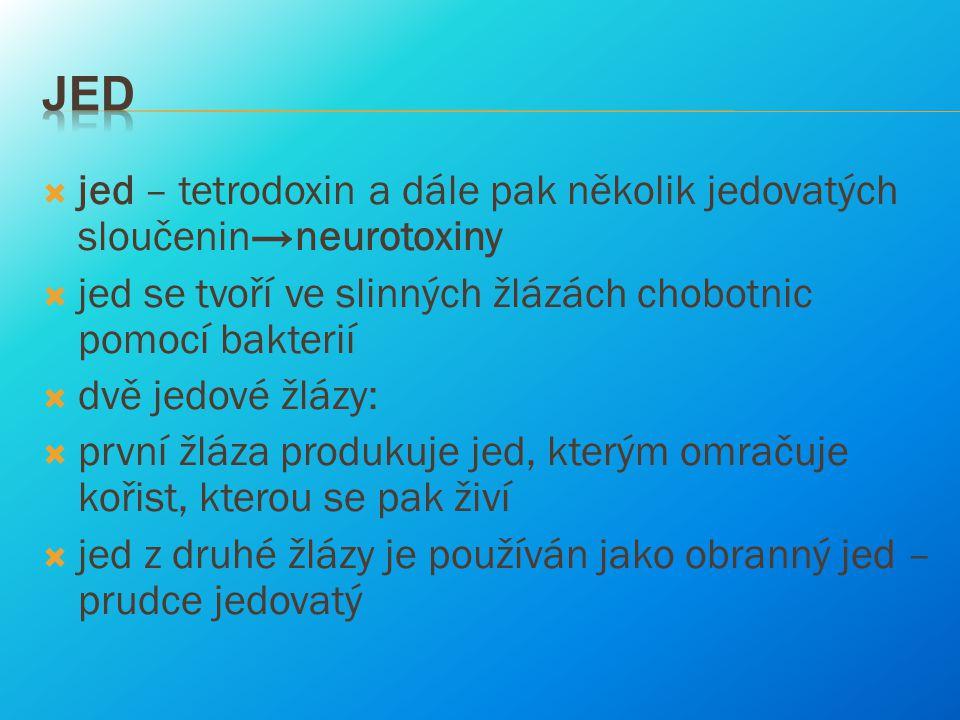  jed – tetrodoxin a dále pak několik jedovatých sloučenin→neurotoxiny  jed se tvoří ve slinných žlázách chobotnic pomocí bakterií  dvě jedové žlázy