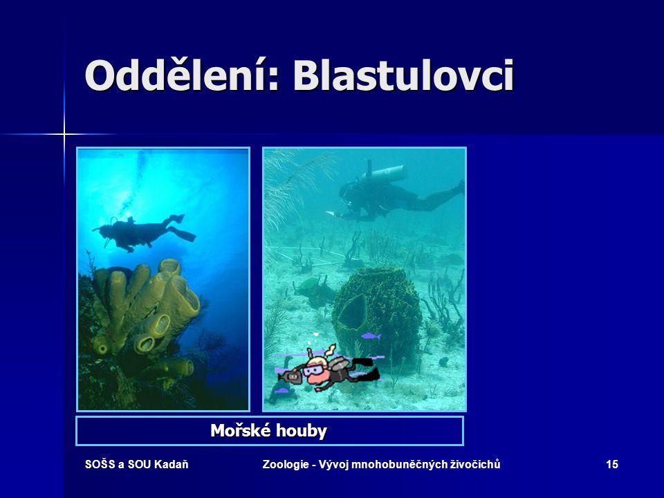 SOŠS a SOU KadaňZoologie - Vývoj mnohobuněčných živočichů14 Kmen: Houby (Porifera) 1.