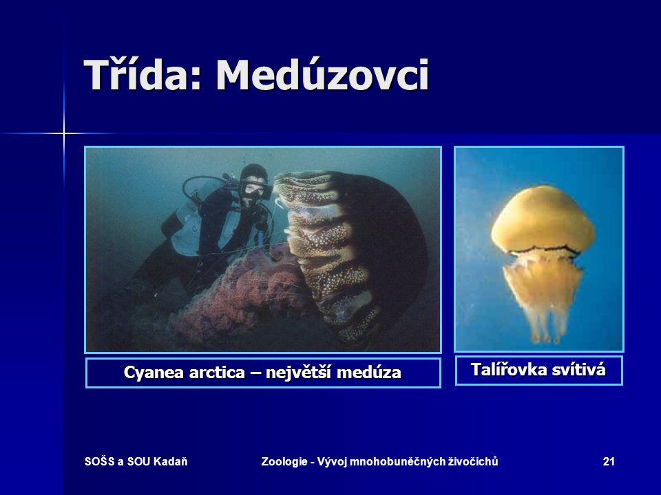 SOŠS a SOU KadaňZoologie - Vývoj mnohobuněčných živočichů20 Třída: Medúzovci Čtyřhrankastředomořská Talířovka ušatá