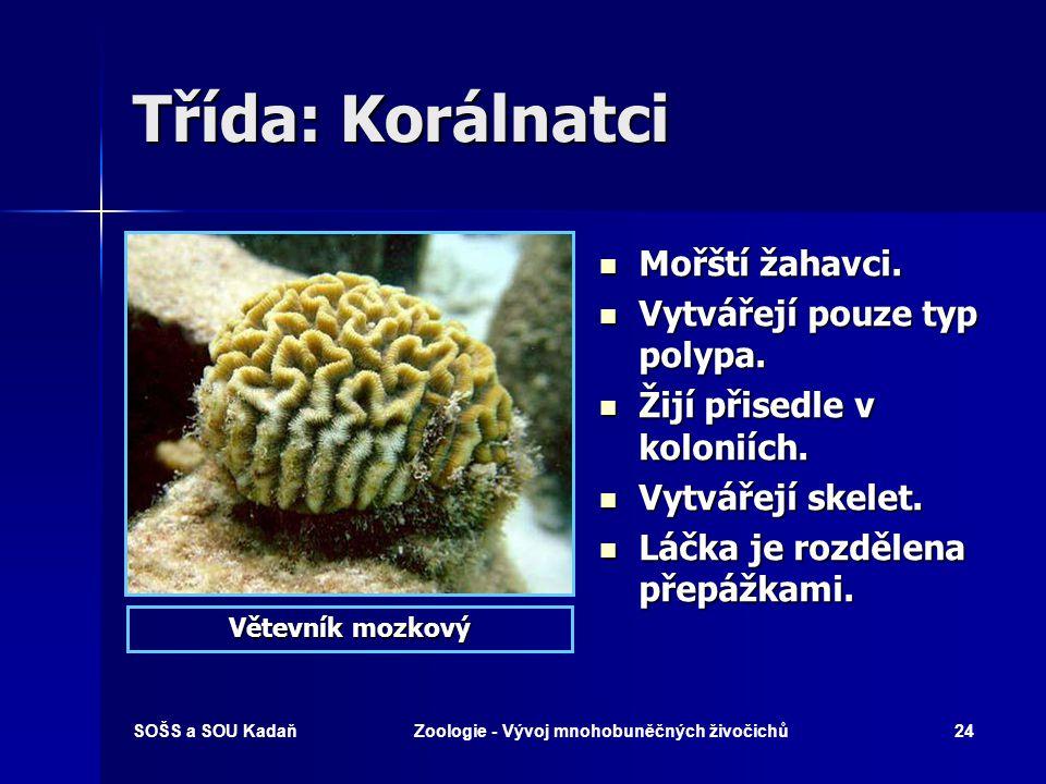 SOŠS a SOU KadaňZoologie - Vývoj mnohobuněčných živočichů23 Postupný vývoj žahavce Vývoj od larvy po dospělce