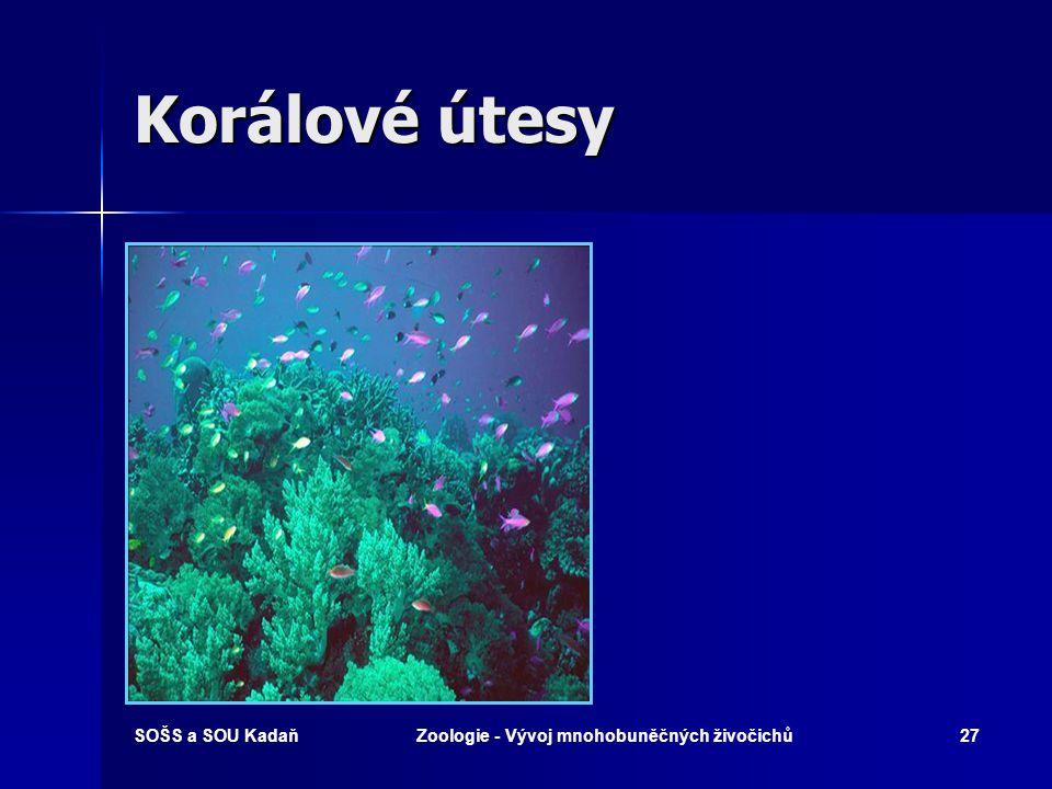SOŠS a SOU KadaňZoologie - Vývoj mnohobuněčných živočichů26 Korálové útesy Korálové útesy v tropických vodách po celém světě jsou komplikovanými ekosystémy, poskytujícími útočiště rybám, krabům, mořským ježkům a řadě dalších živočichů.