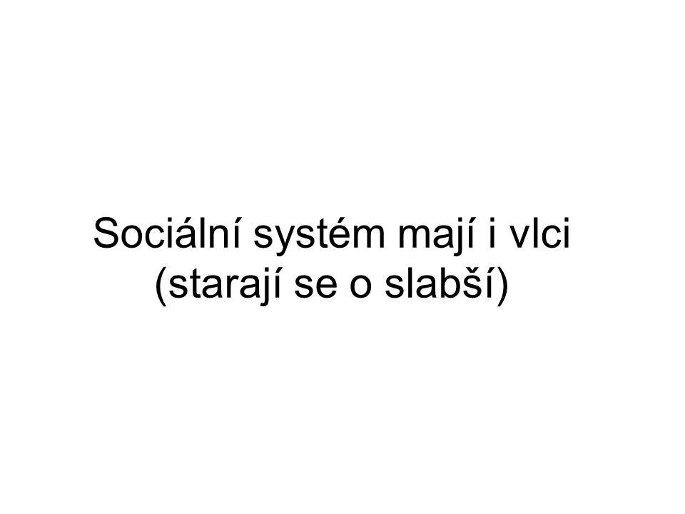 Sociální systém mají i vlci (starají se o slabší)