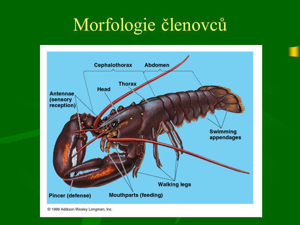 Morfologie členovců