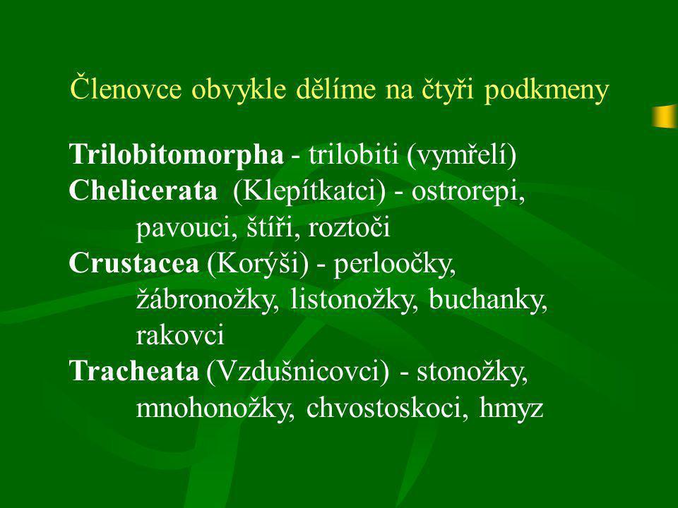 Členovce obvykle dělíme na čtyři podkmeny Trilobitomorpha - trilobiti (vymřelí) Chelicerata (Klepítkatci) - ostrorepi, pavouci, štíři, roztoči Crustac