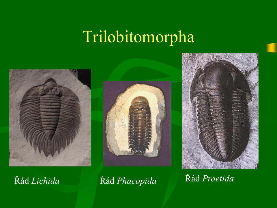 Trilobitomorpha Řád LichidaŘád Phacopida Řád Proetida