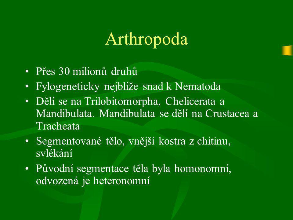 Crustacea (Korýši) třída Maxillopoda Řád Cirripedia (Svijonožci) Rod BalanusChthalamus stellatusLepus fascicularis (Vilejš stvolnatý)