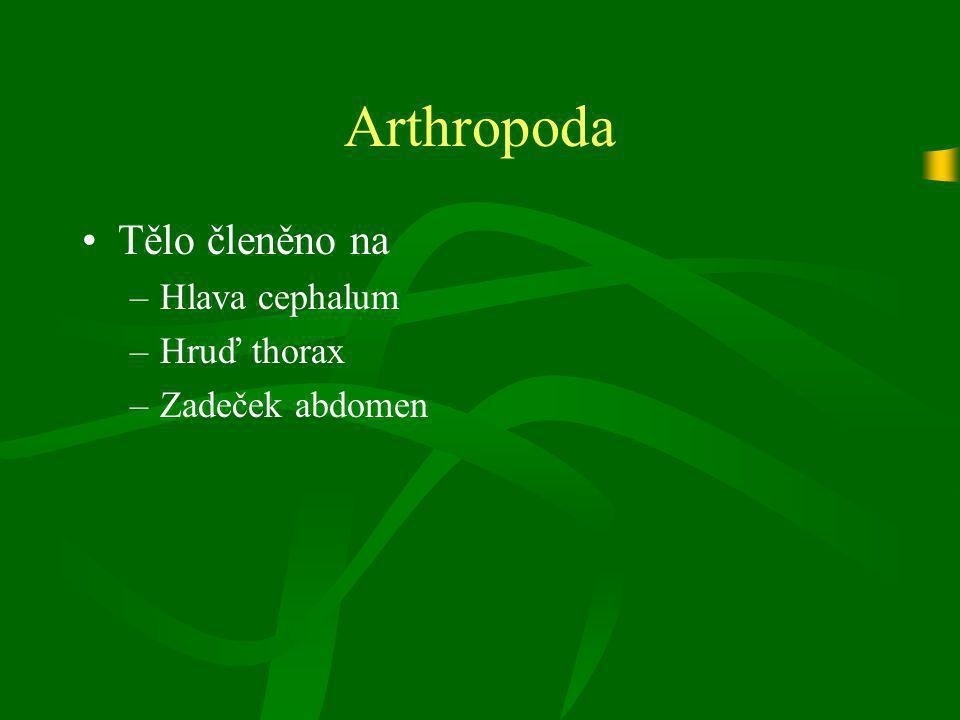 Arthropoda Chelicerata mají na hlavohrudi 6 segmentů: –Chelicery, pedipalpy, 4 páry kráčivých končetin Crustacea mají na hlavě 5 segmentů: –Anteny, antenuly, mandibuly (kusadla), dva páry maxil (čelistí) Tracheata mají na hlavě 4 segmenty: –Anteny, mandibuly, maxily a labium