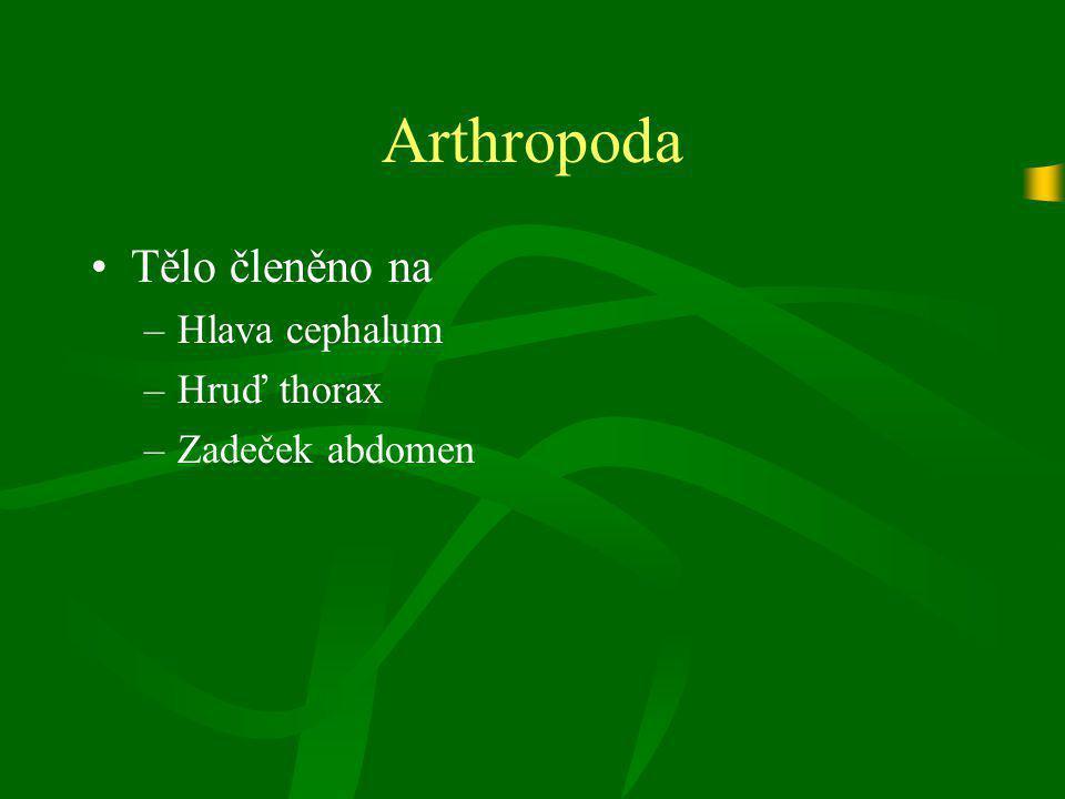 Crustacea (Korýši) třída Maxillopoda Řád Cirripedia (Svijonožci)