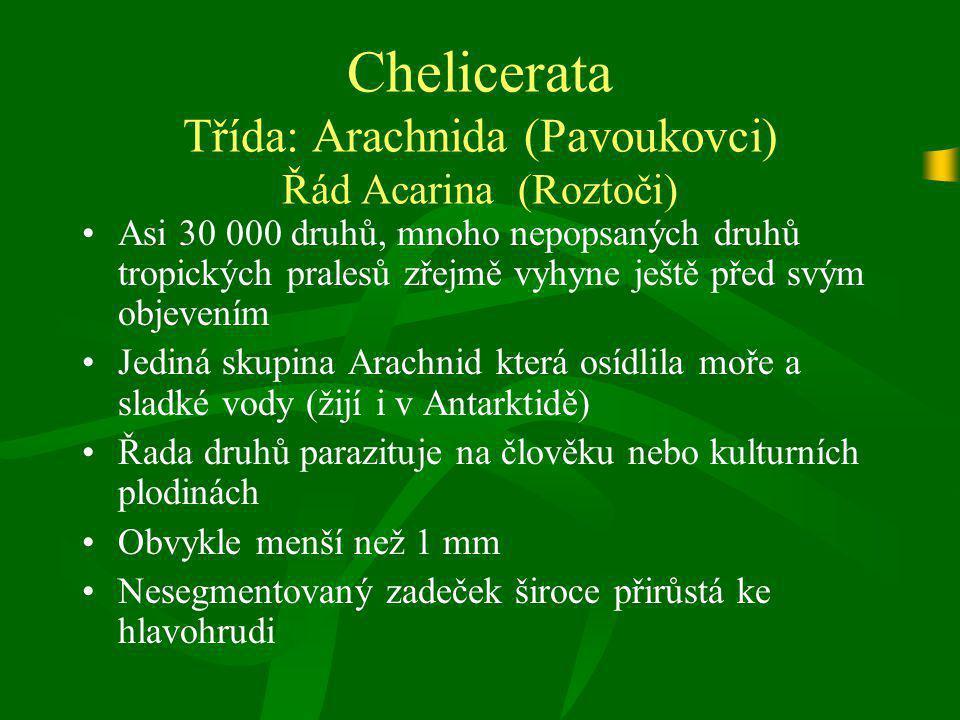 Chelicerata Třída: Arachnida (Pavoukovci) Řád Acarina (Roztoči) Asi 30 000 druhů, mnoho nepopsaných druhů tropických pralesů zřejmě vyhyne ještě před