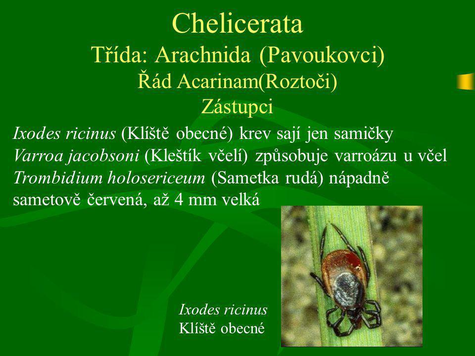 Chelicerata Třída: Arachnida (Pavoukovci) Řád Acarinam(Roztoči) Zástupci Ixodes ricinus (Klíště obecné) krev sají jen samičky Varroa jacobsoni (Kleští