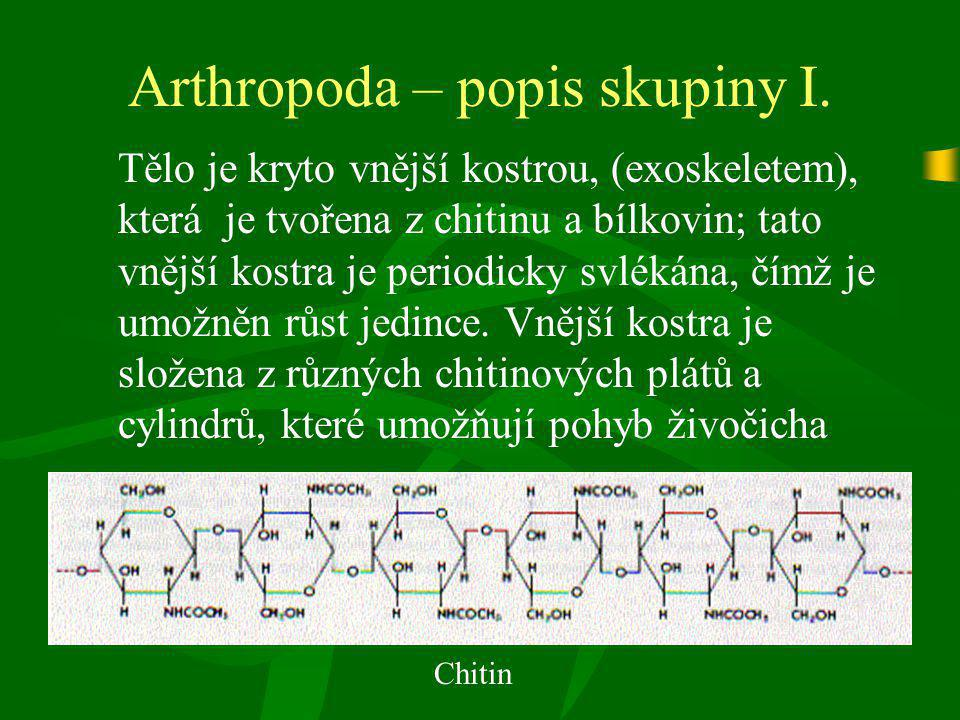 Arthropoda – popis skupiny II.