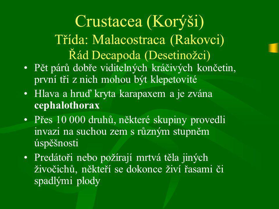Crustacea (Korýši) Třída: Malacostraca (Rakovci) Řád Decapoda (Desetinožci) Pět párů dobře viditelných kráčivých končetin, první tři z nich mohou být
