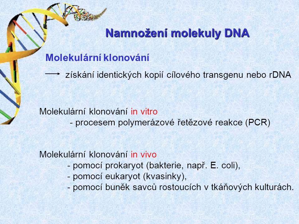 Namnožení molekuly DNA získání identických kopií cílového transgenu nebo rDNA Molekulární klonování Molekulární klonování in vitro - procesem polymerá