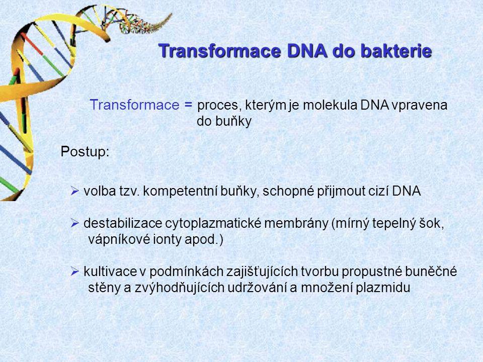 Transformace DNA do bakterie Transformace = proces, kterým je molekula DNA vpravena do buňky  volba tzv. kompetentní buňky, schopné přijmout cizí DNA
