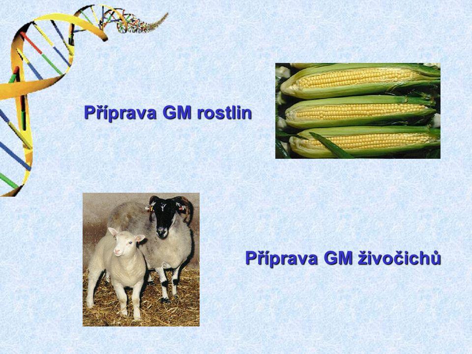Příprava GM rostlin Příprava GM živočichů