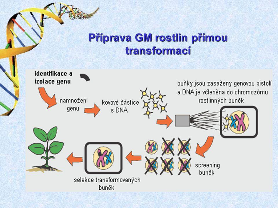 Příprava GM rostlin přímou transformací