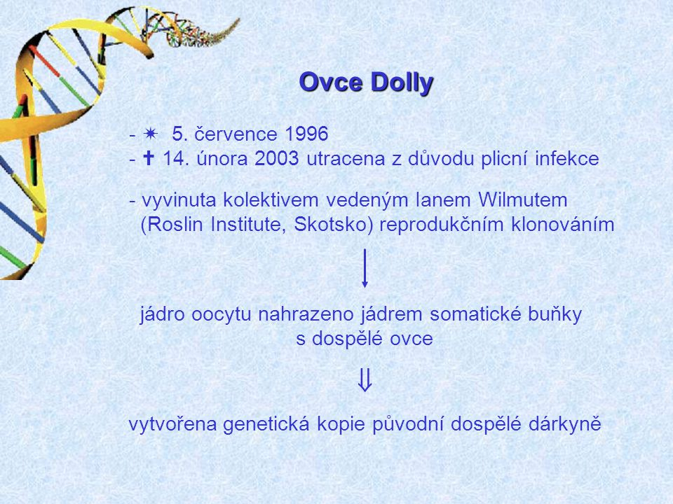 Ovce Dolly -  5.července 1996 -  14.