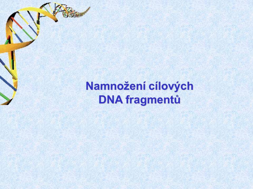 Namnožení cílových DNA fragmentů