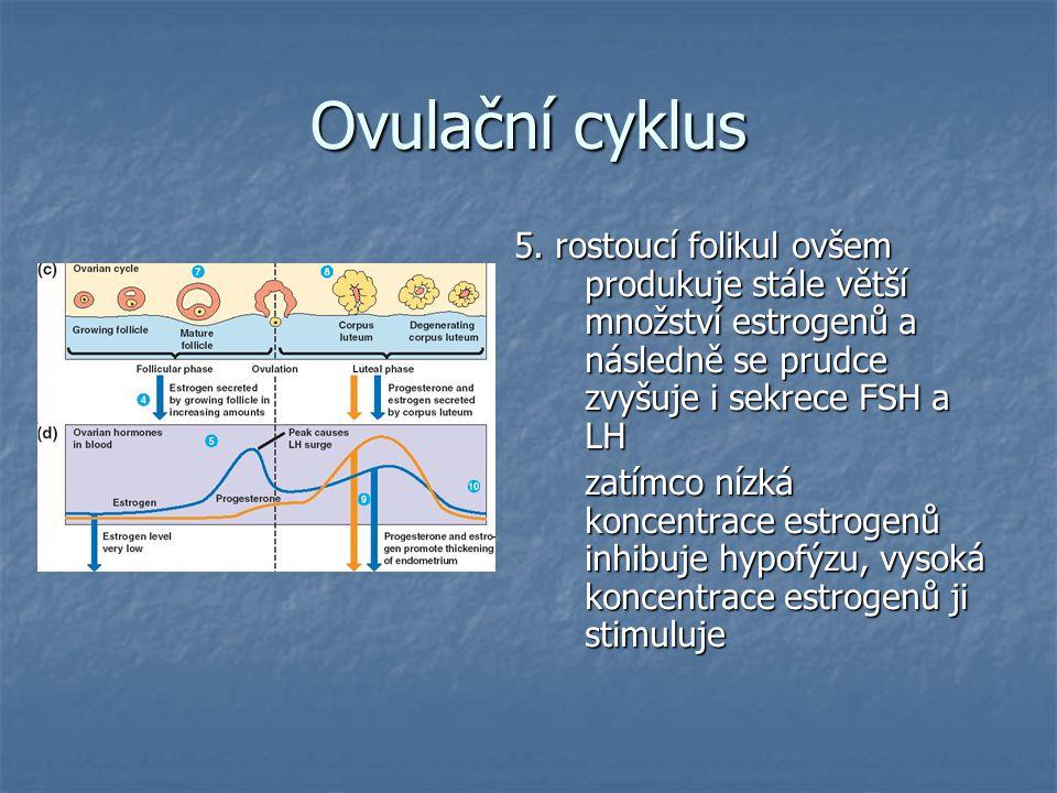 Ovulační cyklus 5.
