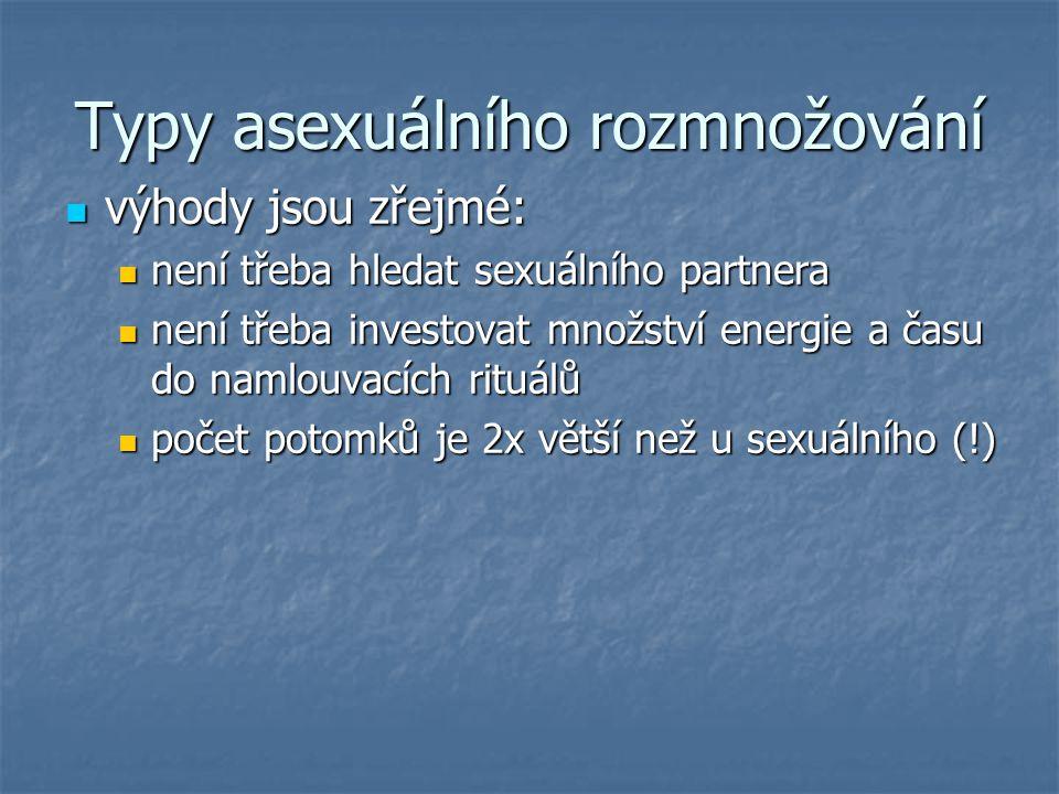 Typy asexuálního rozmnožování výhody jsou zřejmé: výhody jsou zřejmé: není třeba hledat sexuálního partnera není třeba hledat sexuálního partnera není