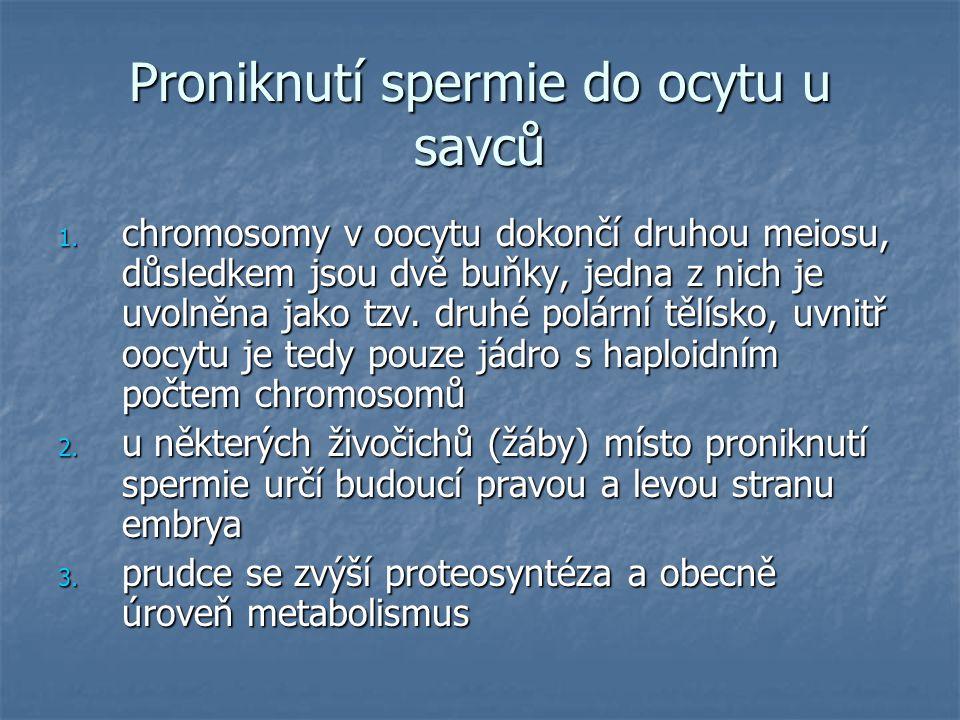 Proniknutí spermie do ocytu u savců 1.