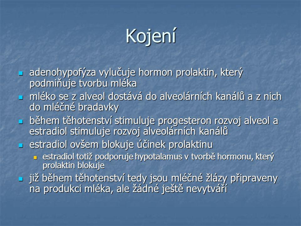 Kojení adenohypofýza vylučuje hormon prolaktin, který podmiňuje tvorbu mléka adenohypofýza vylučuje hormon prolaktin, který podmiňuje tvorbu mléka mlé
