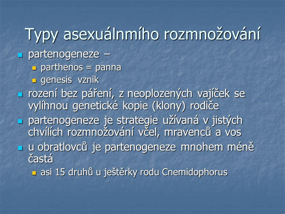 Typy asexuálnmího rozmnožování partenogeneze – partenogeneze – parthenos = panna parthenos = panna genesis vznik genesis vznik rození bez páření, z ne