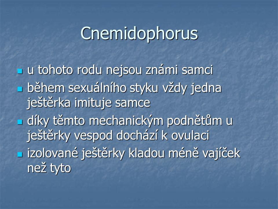 Cnemidophorus u tohoto rodu nejsou známi samci u tohoto rodu nejsou známi samci během sexuálního styku vždy jedna ještěrka imituje samce během sexuálního styku vždy jedna ještěrka imituje samce díky těmto mechanickým podnětům u ještěrky vespod dochází k ovulaci díky těmto mechanickým podnětům u ještěrky vespod dochází k ovulaci izolované ještěrky kladou méně vajíček než tyto izolované ještěrky kladou méně vajíček než tyto
