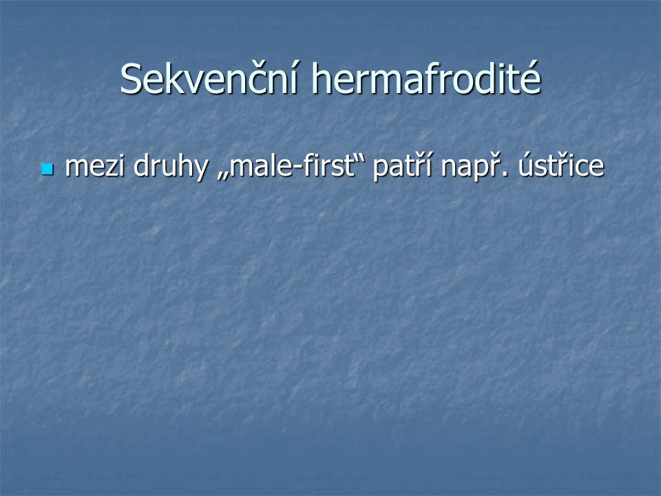 """Sekvenční hermafrodité mezi druhy """"male-first patří např."""