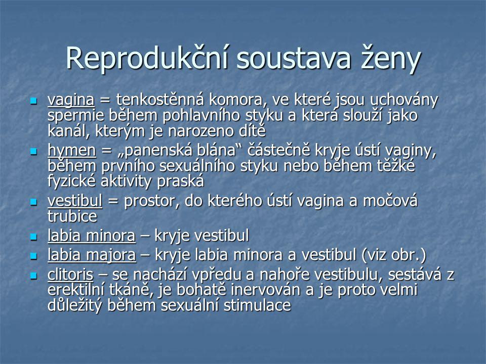 """Reprodukční soustava ženy vagina = tenkostěnná komora, ve které jsou uchovány spermie během pohlavního styku a která slouží jako kanál, kterým je narozeno dítě vagina = tenkostěnná komora, ve které jsou uchovány spermie během pohlavního styku a která slouží jako kanál, kterým je narozeno dítě hymen = """"panenská blána částečně kryje ústí vaginy, během prvního sexuálního styku nebo během těžké fyzické aktivity praská hymen = """"panenská blána částečně kryje ústí vaginy, během prvního sexuálního styku nebo během těžké fyzické aktivity praská vestibul = prostor, do kterého ústí vagina a močová trubice vestibul = prostor, do kterého ústí vagina a močová trubice labia minora – kryje vestibul labia minora – kryje vestibul labia majora – kryje labia minora a vestibul (viz obr.) labia majora – kryje labia minora a vestibul (viz obr.) clitoris – se nachází vpředu a nahoře vestibulu, sestává z erektilní tkáně, je bohatě inervován a je proto velmi důležitý během sexuální stimulace clitoris – se nachází vpředu a nahoře vestibulu, sestává z erektilní tkáně, je bohatě inervován a je proto velmi důležitý během sexuální stimulace"""