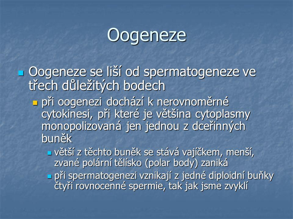 Oogeneze Oogeneze se liší od spermatogeneze ve třech důležitých bodech Oogeneze se liší od spermatogeneze ve třech důležitých bodech při oogenezi doch