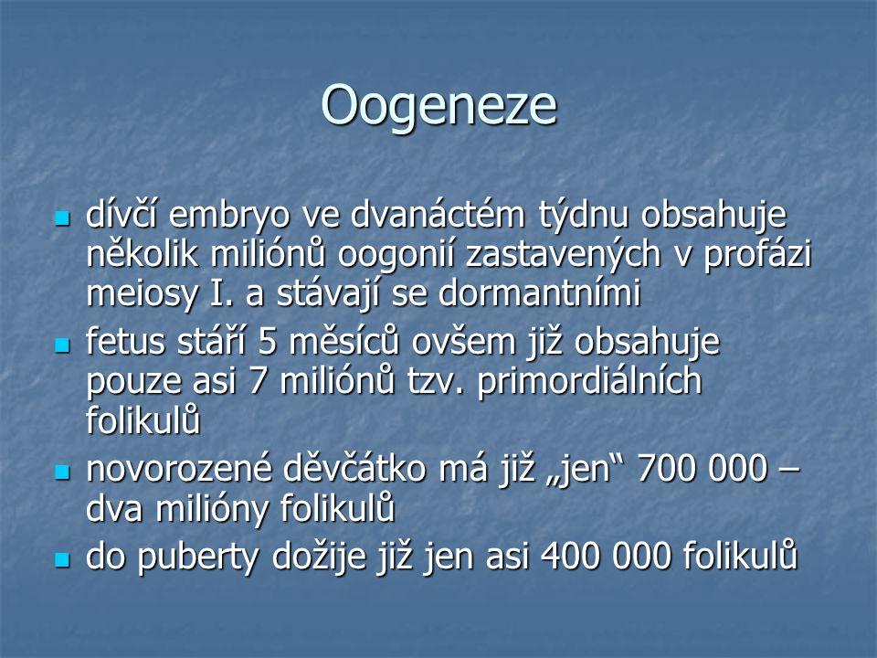 Oogeneze dívčí embryo ve dvanáctém týdnu obsahuje několik miliónů oogonií zastavených v profázi meiosy I. a stávají se dormantními dívčí embryo ve dva