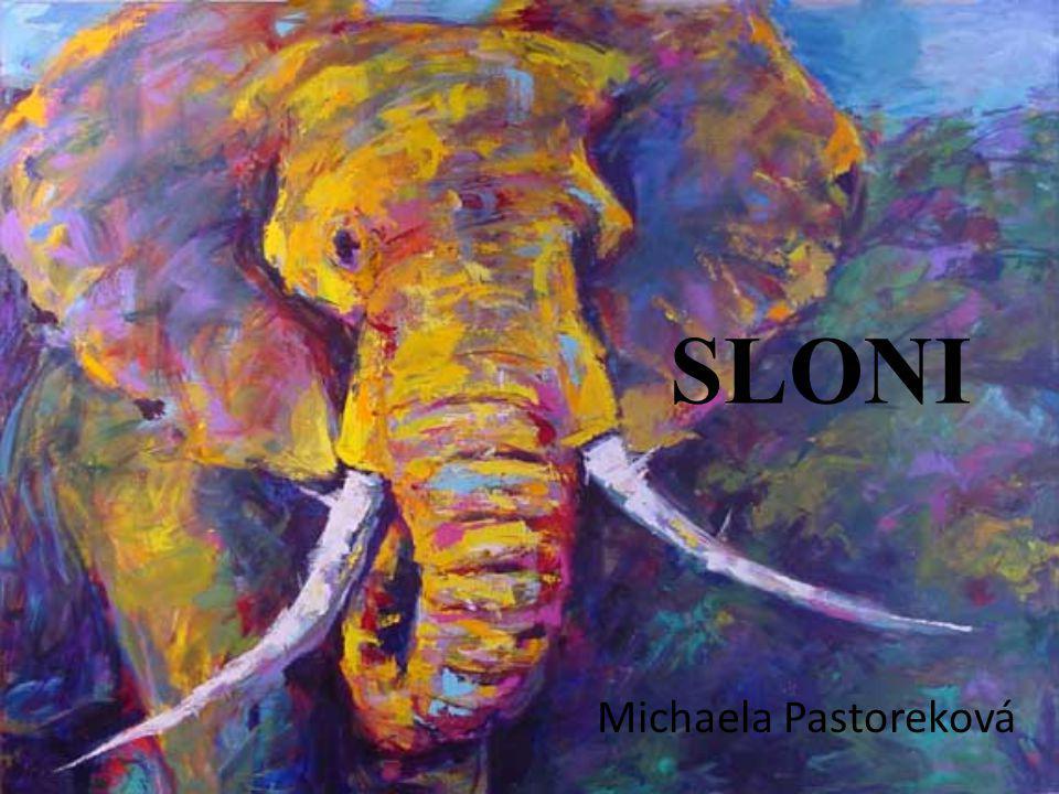 Slon je největší žijící suchozemský savec Největšího slona zastřelili v Angole v roce 1974, vážil 12 000 kilogramů Sloni jsou v současnosti přísně chráněný druh po celém světě