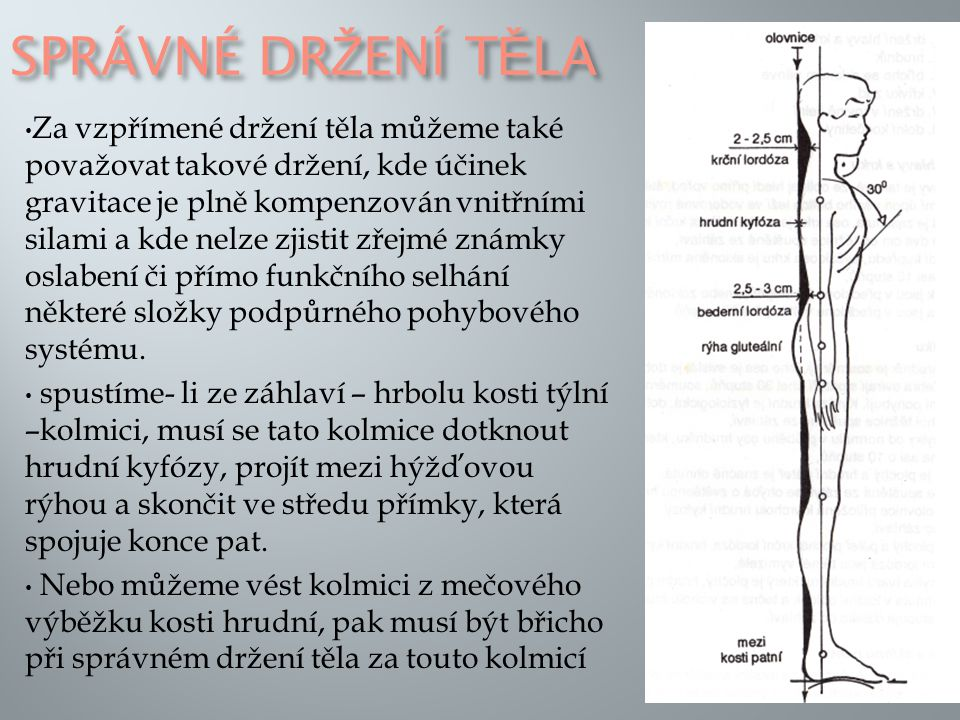 SPRÁVNÉ DR Ž ENÍ T Ě LA Za vzpřímené držení těla můžeme také považovat takové držení, kde účinek gravitace je plně kompenzován vnitřními silami a kde nelze zjistit zřejmé známky oslabení či přímo funkčního selhání některé složky podpůrného pohybového systému.