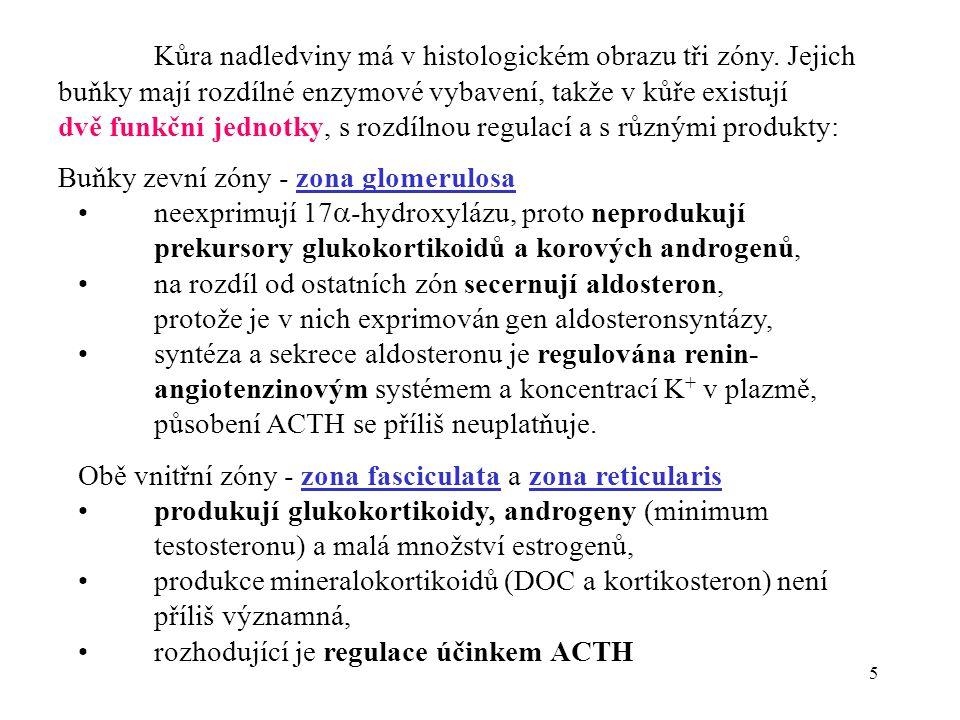 6 Syntéza aldosteronu v zona glomerulosa a regulace sekrece: CHOLESTEROL Pregnenolon Progesteron DOC Kortikosteron 18- OH kortikosteron ALDOSTERON Chol.
